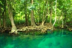 Khlonglied Nam, krabi, Thailand Royalty-vrije Stock Afbeelding