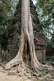 Khmer temple Ta Prohm Stock Image