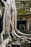 Khmer temple Ta Prohm. Angkor complex, Siem Reap, Cambodia Royalty Free Stock Photos