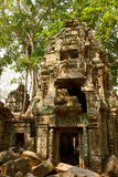 Khmer temple Ta Prohm Stock Images
