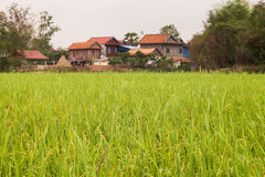 Khmer Wood Houses by a Rice Field in Cambodia Asia. Khmer houses by a field of rice in Cambodia Royalty Free Stock Photography