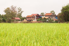 Khmer Wood Houses by a Rice Field in Cambodia Asia. Khmer houses by a field of rice in Cambodia Stock Images