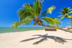 在海滩的热带棕榈树酸值Kho Khao海岛 免版税库存图片