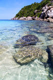 Kho tao bay isle white  beach   and south china sea Stock Photos