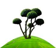 Khoi d'arbre Photos stock