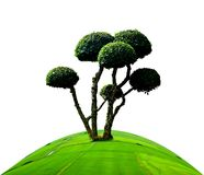 Khoi dell'albero Fotografie Stock