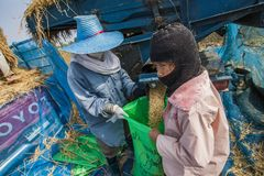 A group of Thai farmers use a machine to separate rice kernels, Royalty Free Stock Photos