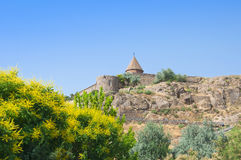Khor Virap is an Armenian monastery located on the Ararat plain in Armenia. Flowering yellow acacia and blue sky.  Royalty Free Stock Images