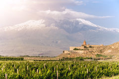 Khor Virap and Mount Ararat. Grape field in Ararat valley. View of Khor Virap and Mount Ararat Royalty Free Stock Photo