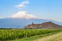 Khor Virap and Mount Ararat. Grape field in Ararat valley. View of Khor Virap and Mount Ararat Royalty Free Stock Photography