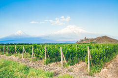 Khor Virap and Mount Ararat. Grape field in Ararat valley. View of Khor Virap and Mount Ararat. Exploring Armenia Stock Photography