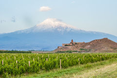 Khor Virap and Mount Ararat. Grape field in Ararat valley. View of Khor Virap and Mount Ararat. Exploring Armenia Royalty Free Stock Images