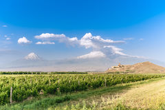 Khor Virap and Mount Ararat. Grape field in Ararat valley. View of Khor Virap and Mount Ararat. Exploring Armenia Royalty Free Stock Photography