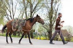 Armenian cowboy herding his cow herd. royalty free stock photography