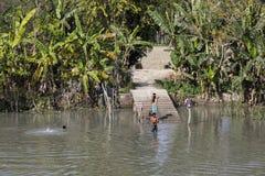 Khulna, Μπανγκλαντές, την 1η Μαρτίου 2017: Οι νέοι από το Μπανγκλαντές λούζουν στον ποταμό Στοκ φωτογραφίες με δικαίωμα ελεύθερης χρήσης
