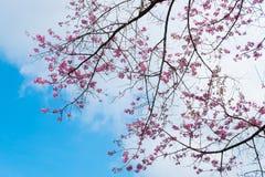 Khun Chang Kian Στοκ φωτογραφίες με δικαίωμα ελεύθερης χρήσης