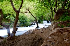 Khurmal Forrest in mountains of autonomous Kurdistan region near Iran Stock Photo