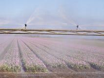 Kiści maszyna nad tulipanowym polem Zdjęcie Stock