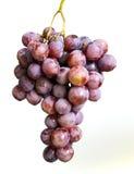 kiście winogron obrazy royalty free