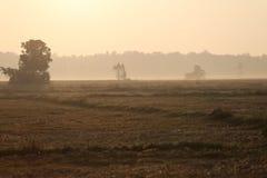 Łąki zakrywają dużym drzewem Obraz Royalty Free