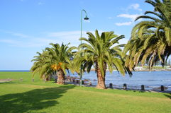 Kiama Australia palm trees promenade Royalty Free Stock Photos