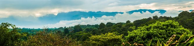 Kibale Nationaal Park Westelijk Oeganda dichtbij Fort Portal royalty-vrije stock foto's