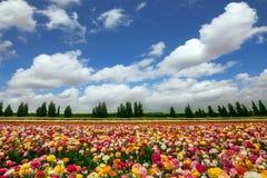 Kibboutz de fleur près de bande de Gaza Image libre de droits