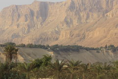 Kibbutz Ein Gedi in the Desert of Judea, Dead Sea, Holy Land Stock Photos