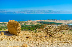 The kibbutz of Ein Gedi. The view from the mountain top on the agricultural planting of Ein Gedi kibbutz on the coast of the Dead Sea, Israel Royalty Free Stock Images