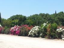 Kibbutz Einat e la zona circostante Fotografie Stock Libere da Diritti