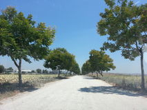 Kibbutz Einat and the surrounding area. Nature, landscapes in the area of Kibbutz Einat in the center of the country, Israel Stock Photos