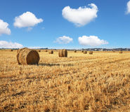 Kibbutz field after harvest Royalty Free Stock Photo