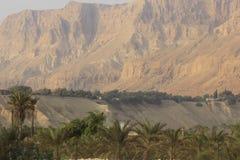Kibbutzer Ein Gedi i öknen av Judea, dött hav, heligt land arkivfoton