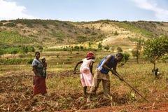 KIBUYE, RWANDA, AFRİCA - SEPTEMBER 11, 2015: Unidentified workers. Stock Photography