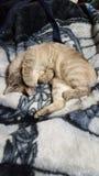 kiciunia śpiąca zdjęcia royalty free