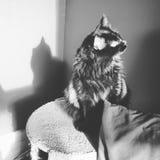Kiciunia i jego cień Zdjęcie Royalty Free