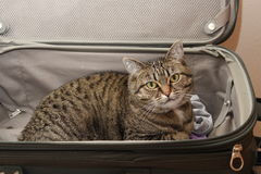 Kiciunia kota miłość Brakuje Ciebie Zdjęcia Stock