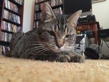 Kiciunia kota tabby kłaść w dół fotografia stock