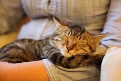 kiciunia śpi w ten sposób wygodnego Obraz Royalty Free