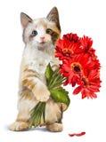Kiciunia trzyma bukiet czerwoni kwiaty Obrazy Stock