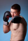 Kick-boxer Royalty Free Stock Photography