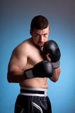 Kick-boxer Stock Image