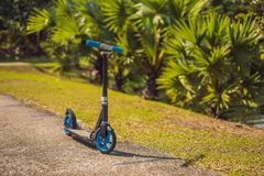 Kick scooter in the park. Outdoor activity for children on safe residential street. Active sport for preschool kid.  stock image