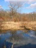 Kickapoo delstatspark Illinois Royaltyfria Bilder
