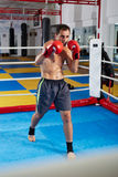 Kickbox fighter shadow boxing in the ring Royalty Free Stock Photos