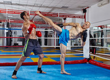 Kickbox fighters in the ring Royalty Free Stock Image