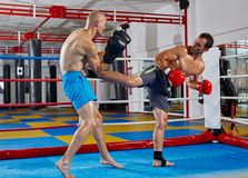 Kickbox fighters sparring in the ring Stock Photos