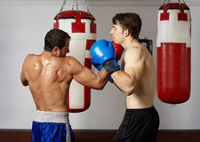 Kickbox sparring Stock Images