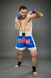 Kickboxer in guard stance Royalty Free Stock Photos