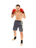 Kickboxer in guard stance Royalty Free Stock Photography